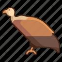vulture, bird, animal, wild