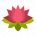 asia, beautiful, beauty, bloom, blooming, blossom, lotus