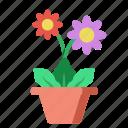 flower, gerbera, daisy, nature, indoor, plant