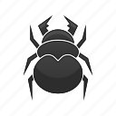 beetle, bug, insect, nature