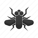 bug, fly, insect, nature
