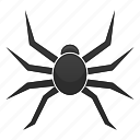 bug, insect, nature, spider