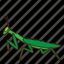 bug, insect, mantis, mantodea