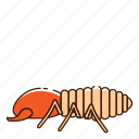 bug, insect, termite