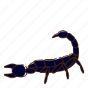bug, insect, scorpion