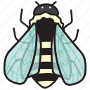 bee, insect, bug, animal, nature, spring, honey