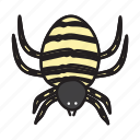 spider, insect, bug, nature, animal, plant