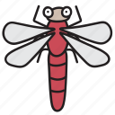 dragonfly, insect, bug, nature, autumn, garden, forest