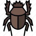 animal, bug, dung beetle, garden, insect, nature, spring
