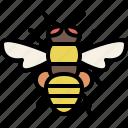 animal, bug, garden, honeybee, insect, nature, spring