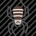 animal, bug, garden, halloween, insect, spider, spring