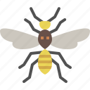 animal, bug, garden, insect, nature, spring, wasp