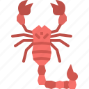 animal, bug, garden, insect, nature, scorpion, spring