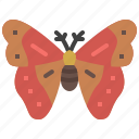 animal, bug, garden, insect, moth, nature, spring