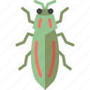 animal, bug, garden, insect, jewel beetle, nature, spring
