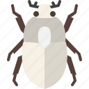 animal, bug, garden, insect, nature, scarab beetle, spring
