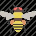 animal, bee, bug, garden, honeybee, insect, spring