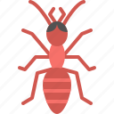 animal, ant, bug, garden, insect, nature, spring