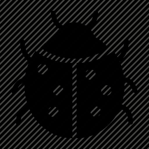 bug, insect, ladybug, ladybug icon icon