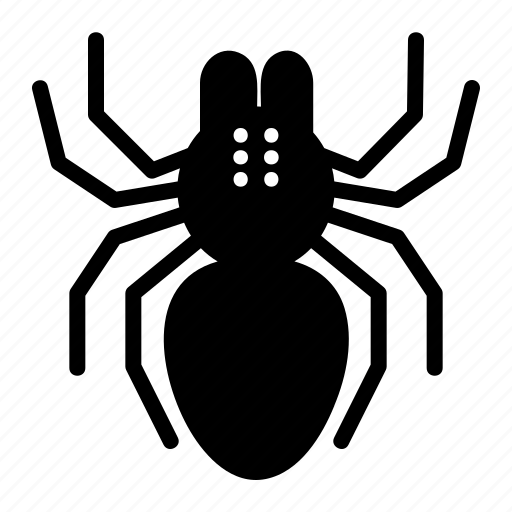insect, spider, tarantula, web icon