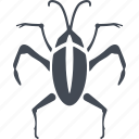 beetle, insects, mustache, nature icon