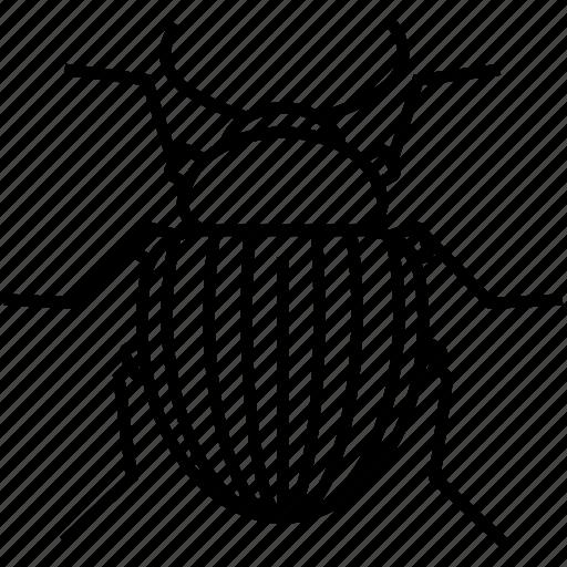 bug, colorado beetle, insect, nature, potato icon