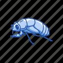 animal, bug, cicada, flying bug, insect, invertebrates, pest icon