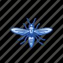 animal, bug, firefly, glowworm, insect, lightning bug