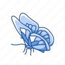 animal, butterfly, flying insects, insect, moth, pest, skipper icon