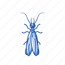 animal, earwig, herbivore, insect, noturnal, pest icon