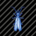 animal, earwig, herbivore, insect, noturnal, pest