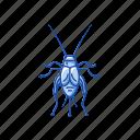 animal, cricket, grasshopper, insect, pest, tree cricket