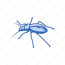 animal, beetle, bug, darkling beetle, insects, pest, scarab icon