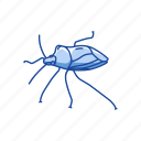 animal, beetle, bug, insect, shield bug, stink bug