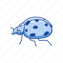 animal, bug, insects, lady beetle, lady bug icon