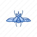 animal, bug, earwig, insect, invertebrate, pest, scarab icon