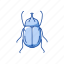 animal, beetle, bug, flower chafer, insect, pest, scarab icon
