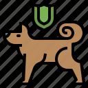 care, dog, insurance, pet, umbrella