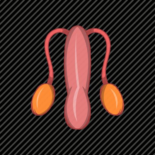 anatomy, cartoon, male, organ, penis, sexual, sign icon