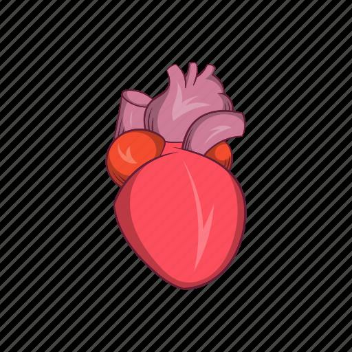 anatomy, cartoon, heart, human, medical, organ, sign icon