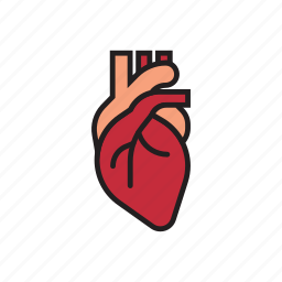 body, heart, hearthbeat, human, internal organs, live, organs icon