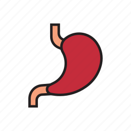 acid, body, food, human, internal organs, organs, stomach icon
