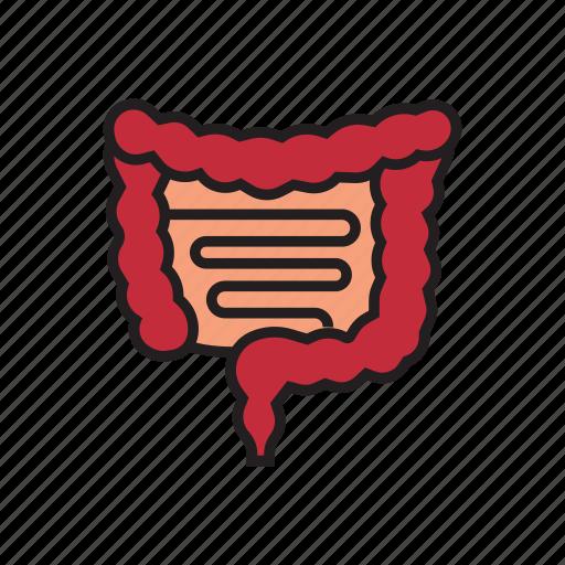 body, healthy, human, internal organs, intestines, organs, surgery icon