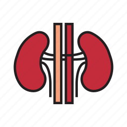 body, healthy, human, implant, internal organs, kidneys, organs icon