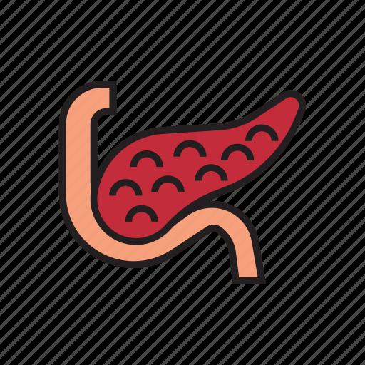 body, healthy, human, internal organs, organs, pancreas icon