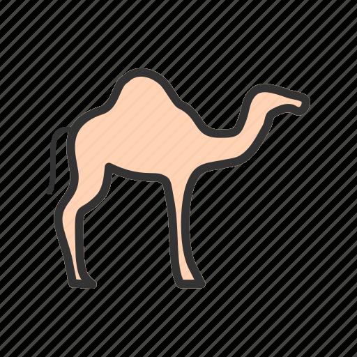 arab, camel, culture, desert, sand, tradition, travel icon