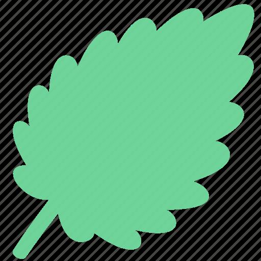 herb, leaf, mint icon