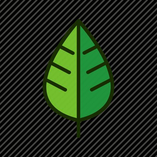 eco, leaf, natural, nature, plant icon