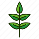 eco, leaf, natural, nature, plant icon