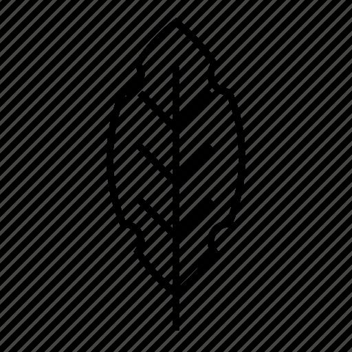 bio, leaf, nature, organic icon